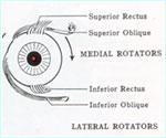Eye muscle strain causing dizziness and headaches
